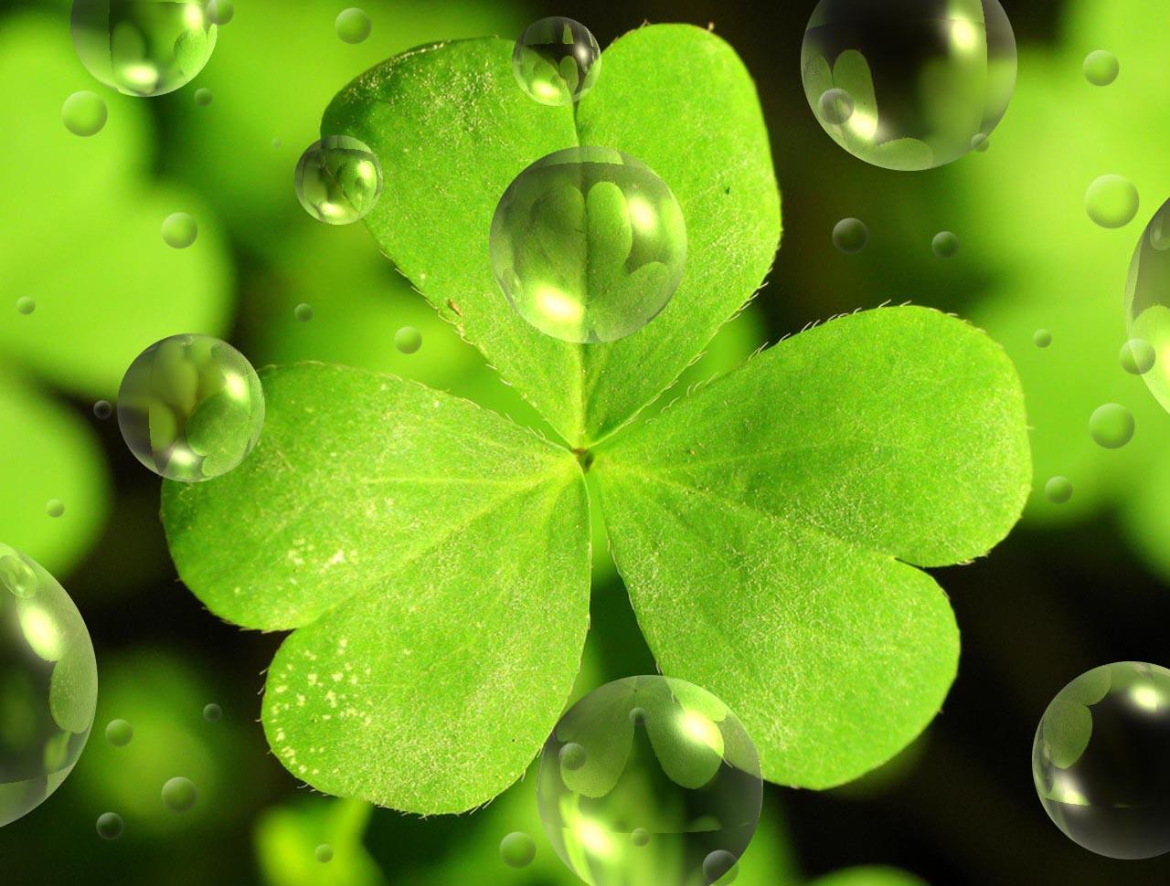 Clover-Leaf-For-St-Patricks-Day